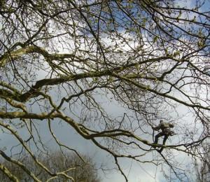 grands-arbres-1