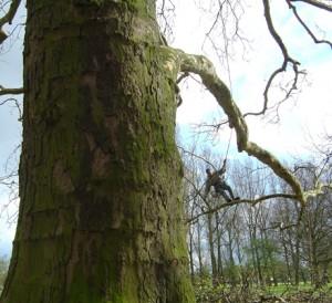 grands-arbres-2