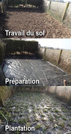 arboclean-plantation-3